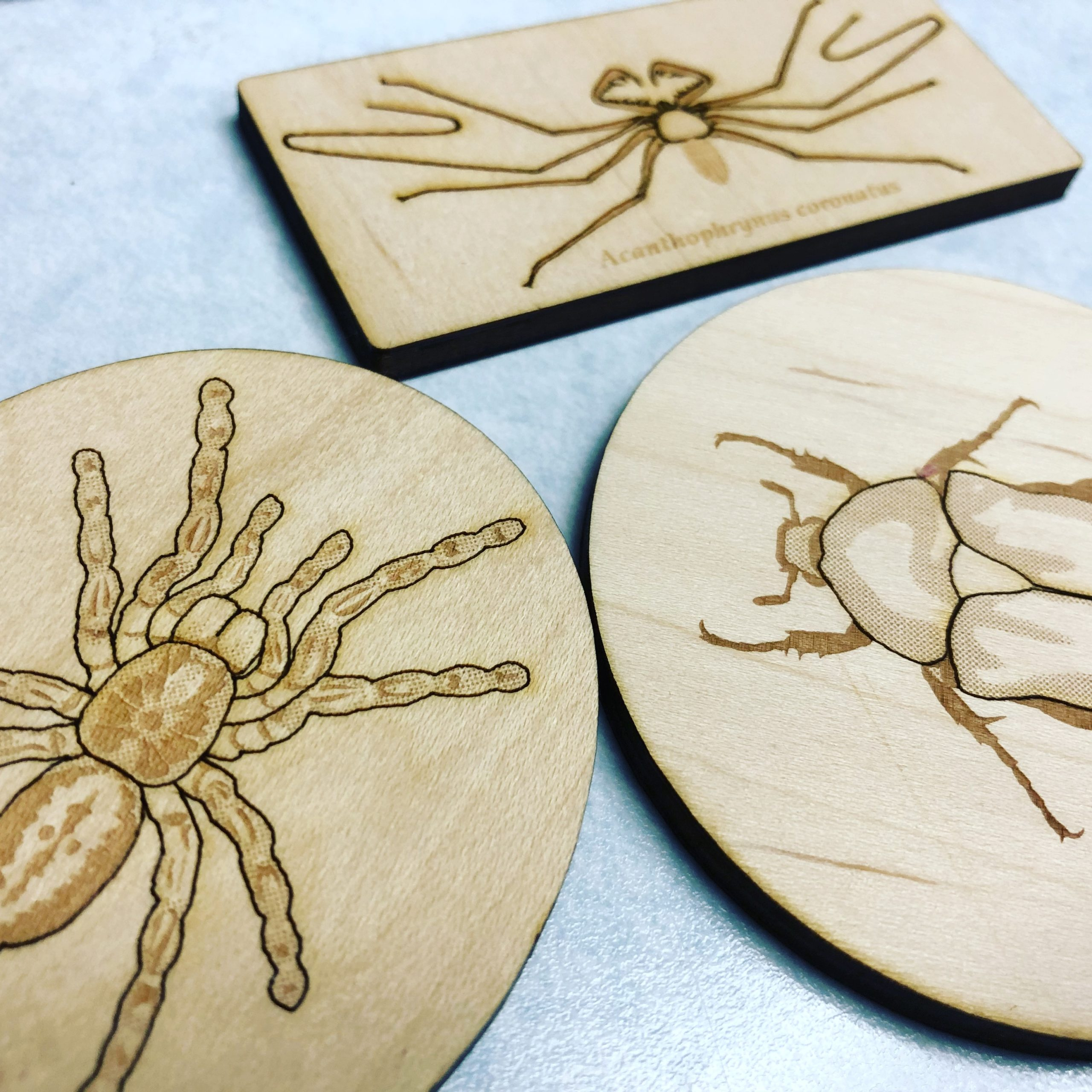 Arthropod Magnets